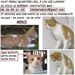 CHAT <span class='Perdu_Texte'>PERDU</span> le Mardi 7 Nov. 2017 en France à Lys-lez-Lannoy (59390)<br>Déposé le 19-01-2018