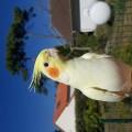 Oiseau <span class=