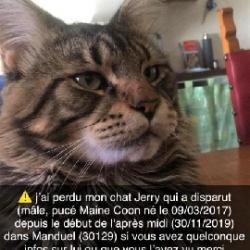CHAT <span class='Perdu_Texte'>PERDU</span> le Samedi 30 Nov. 2019 en France à Manduel (30129)<br>Déposé le 01-12-2019