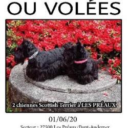 CHIENNE <span class='Perdu_Texte'>PERDUE</span> le Lundi 1 Juin 2020 en France à Les Préaux (27500)<br>Déposé le 13-06-2020